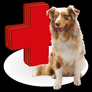 Picture for category vitamíny a léčiva pro psy