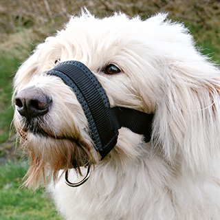 Picture for category Trixie nylon muzzles