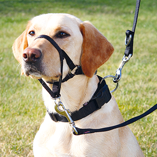 Picture for category Trixie training harness