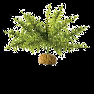 Obrázok pre kategóriu rostliny plastové